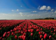 move_to_the-netherlands