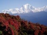 removalcost_nepal