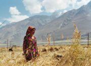 mover_tadzhikistan